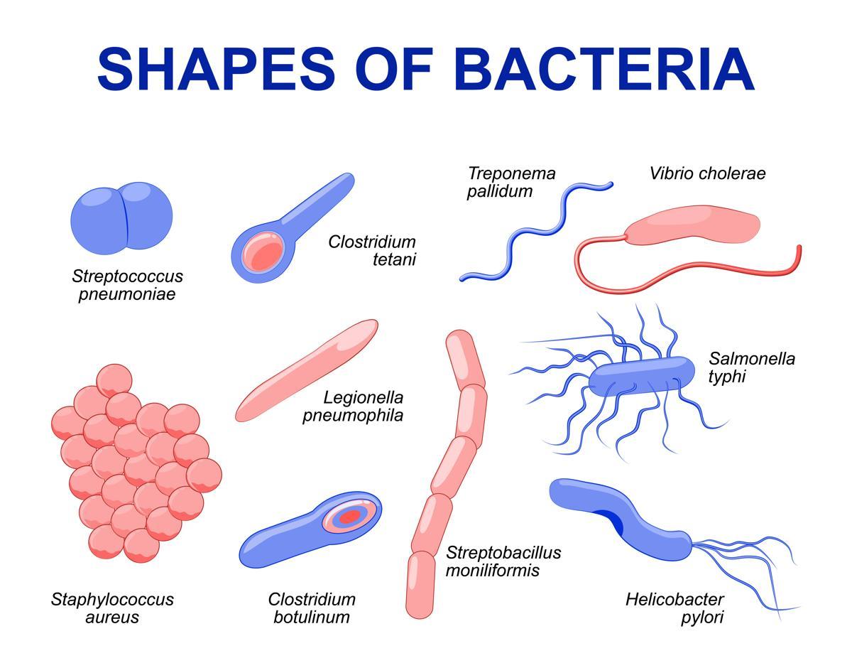 http://mdturk.com/wp-content/uploads/2020/11/1200-94798069-shapes-of-bacteria.jpg