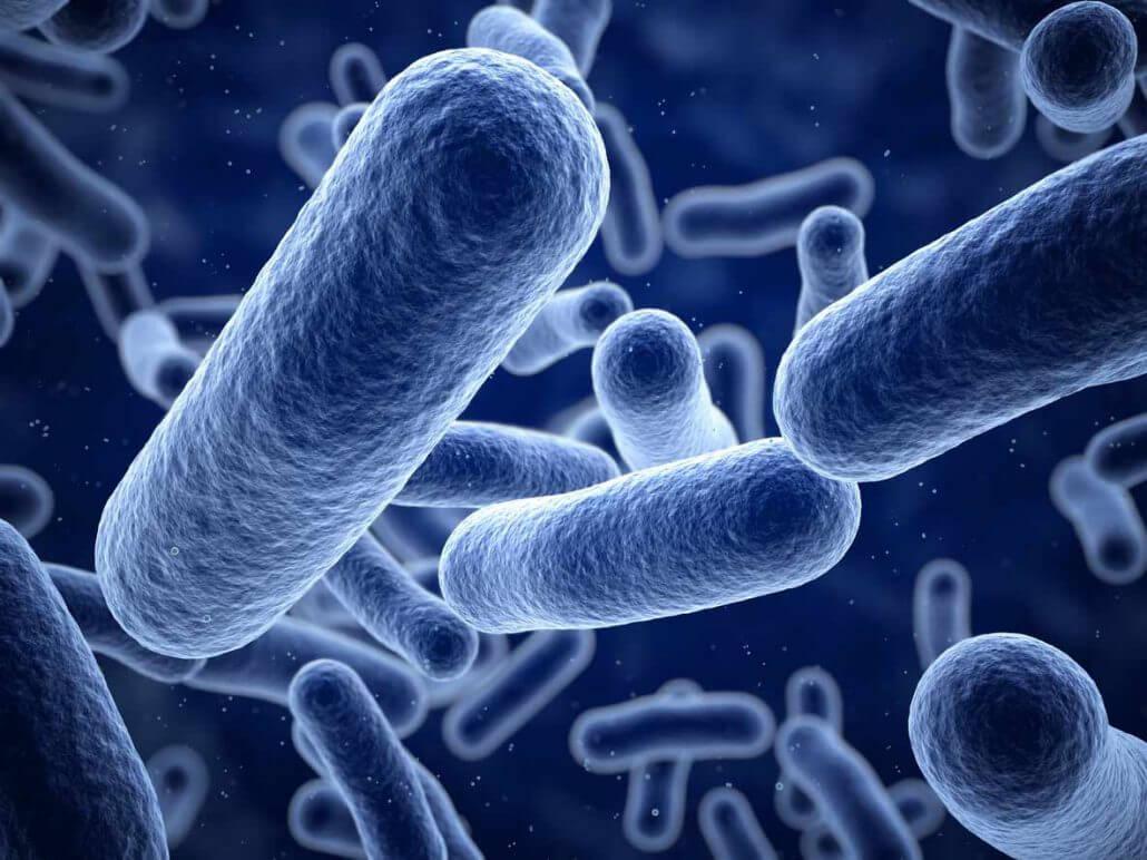 Listeria bakterileri